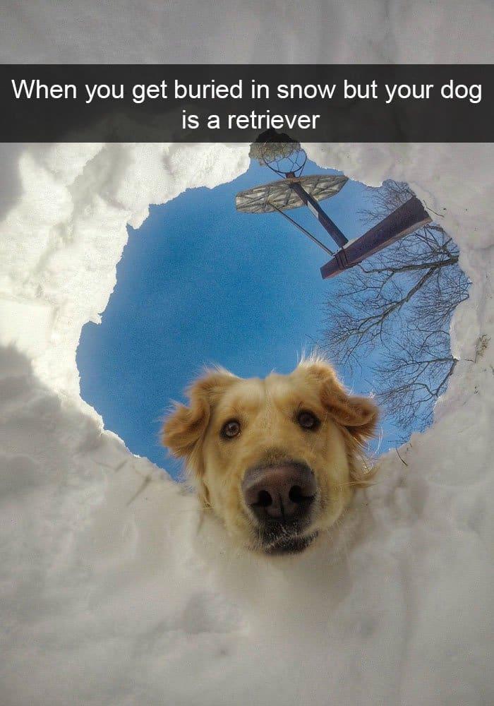 buried-in-snow-dog-retriever