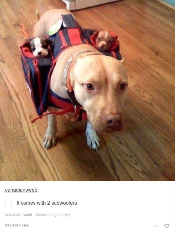 dog-2-subwoofers