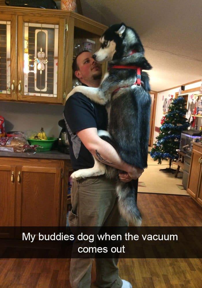 dog-afraid-of-vacuum