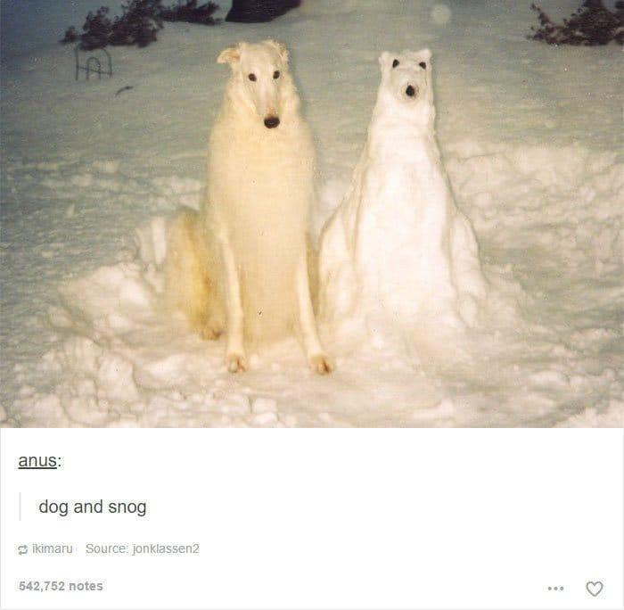 dog-and-snow-dog