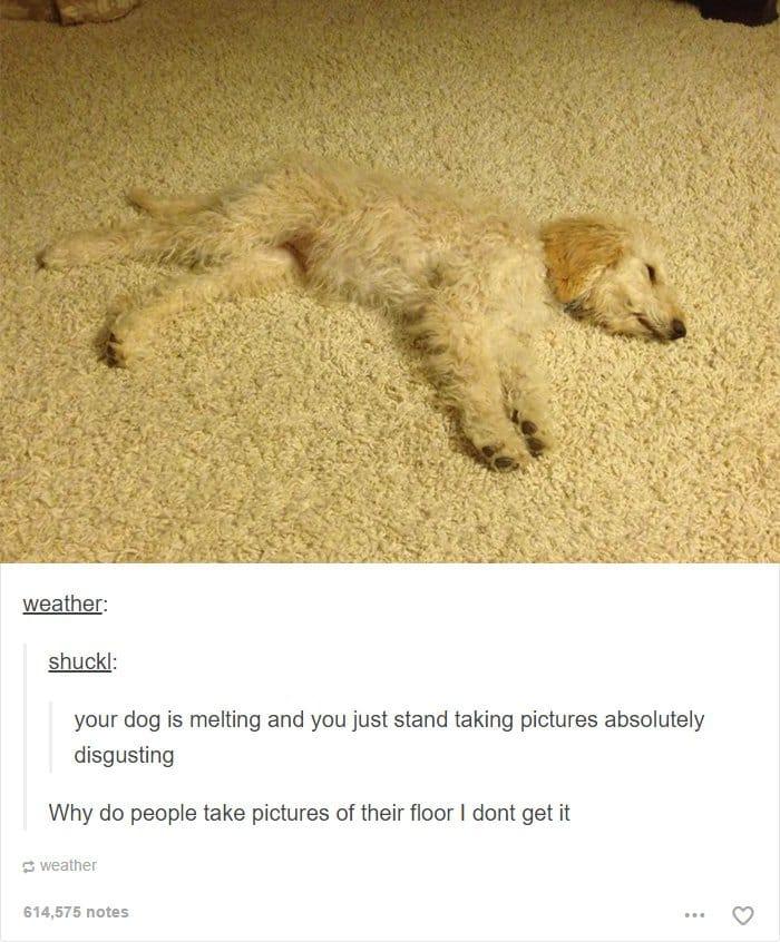 dog-blending-with-carpet