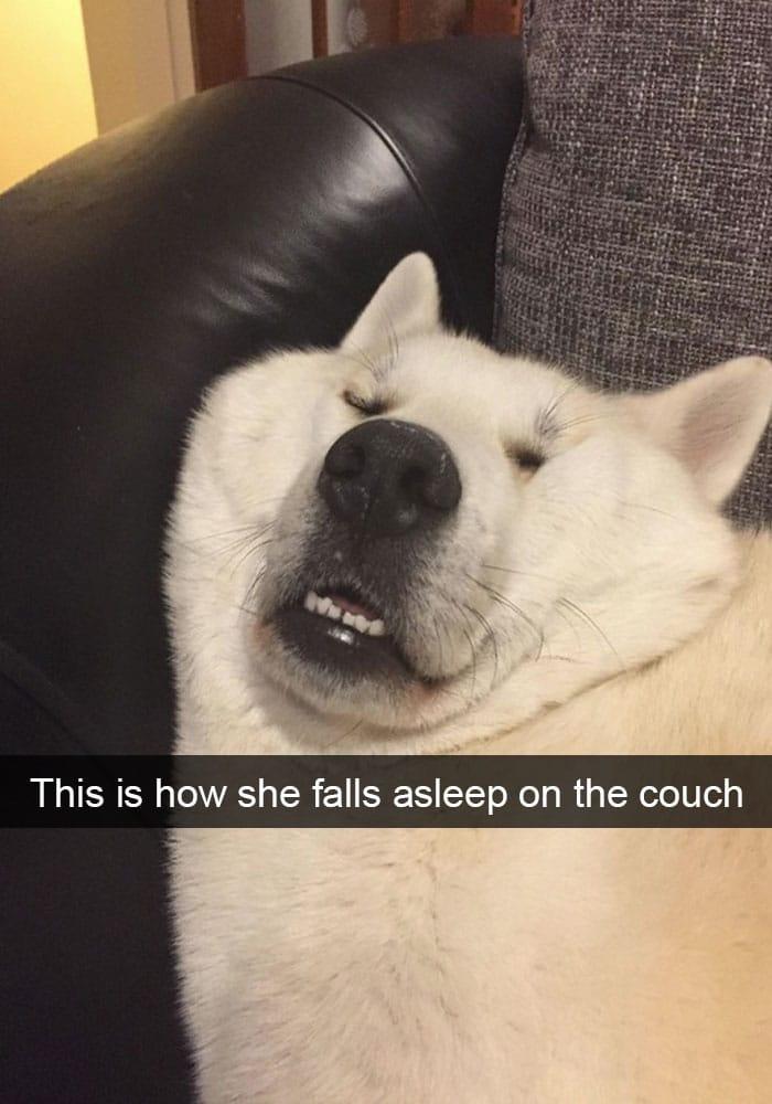 dog-falling-asleep-double-chin