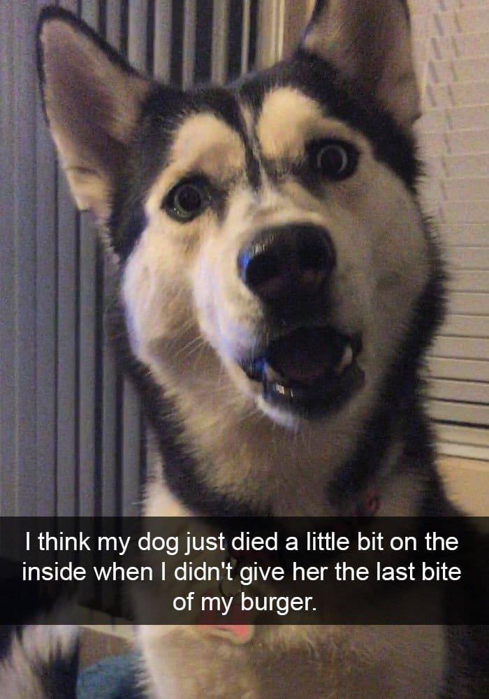 dog-gutted-last-bite-of-burger