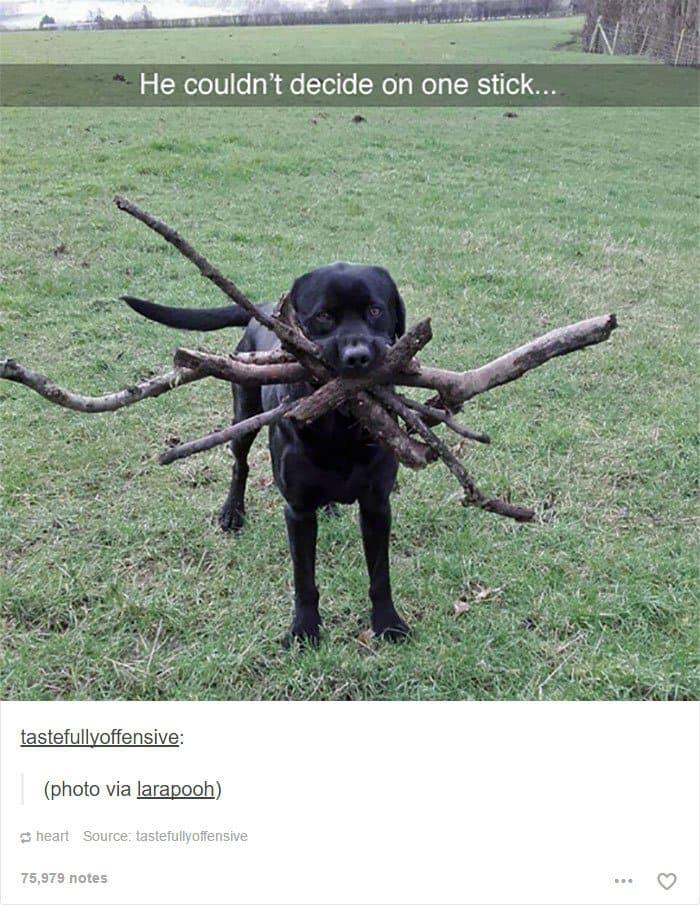 dog-holding-lots-of-sticks