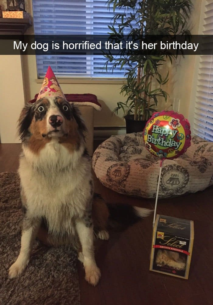dog-horrified-birthday