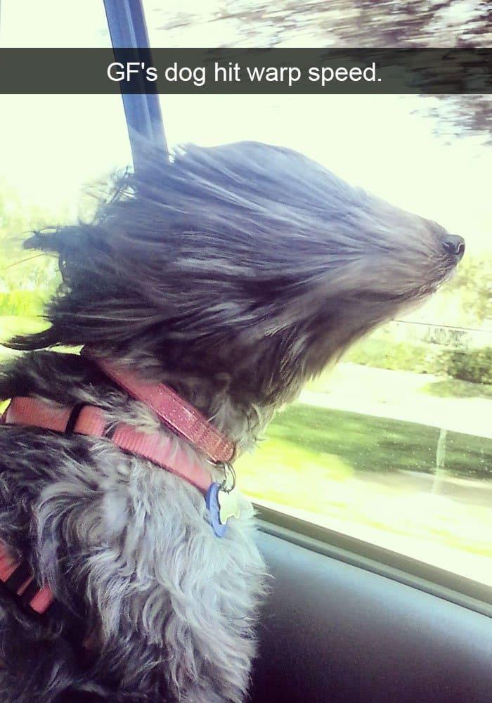 dog-in-wind-funny-warp-speed
