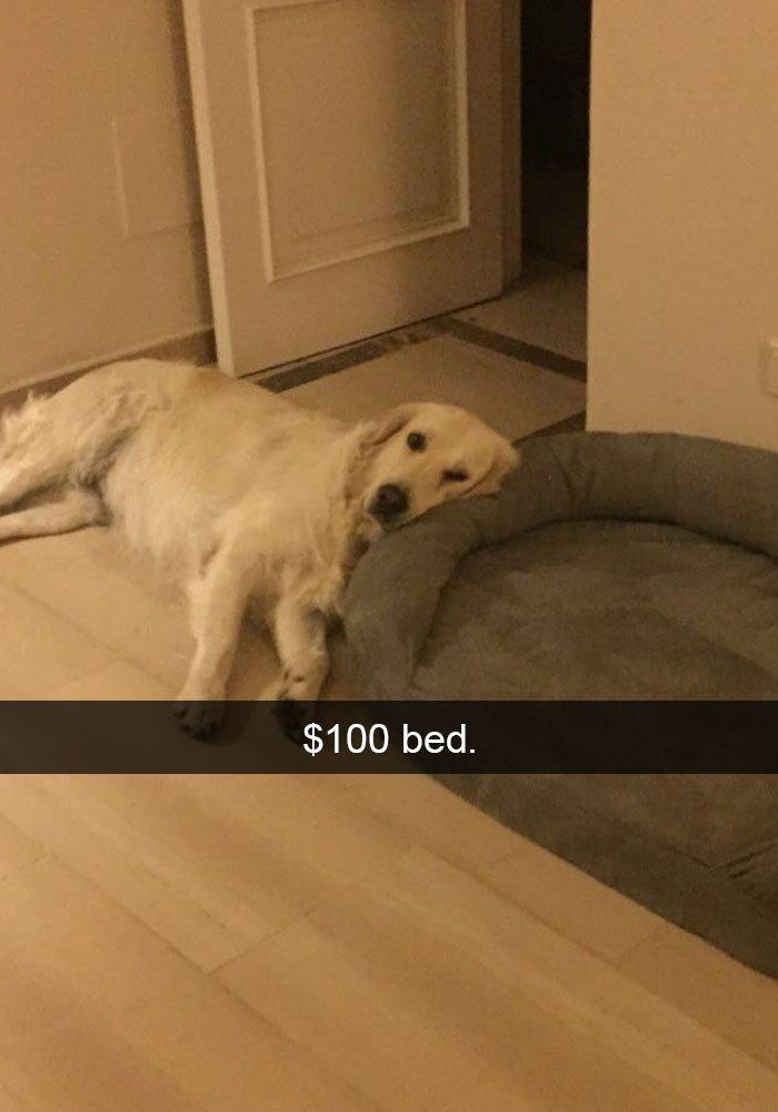dog-lying-on-floor-instead-of-bed