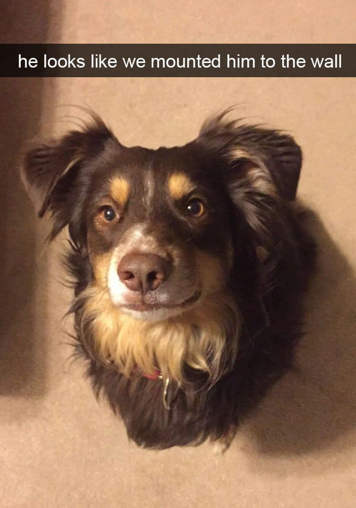 dog-mounted-to-wall-snapchat