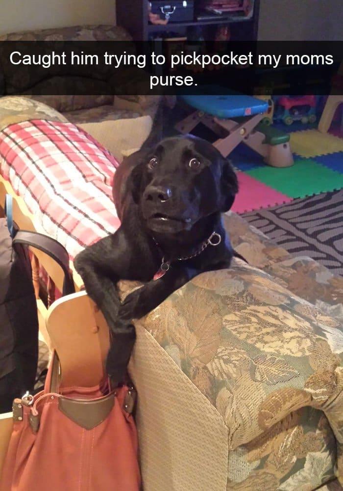 dog-pickpocketing