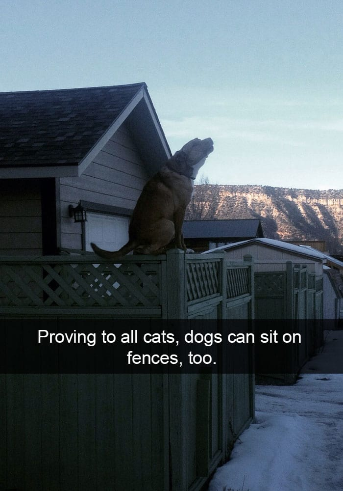 dog-proving-to-cats-sitting-on-fence