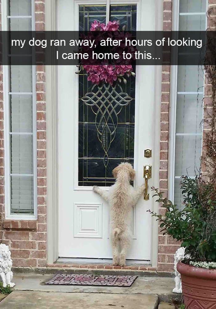 dog-ran-away-came-home-to-this