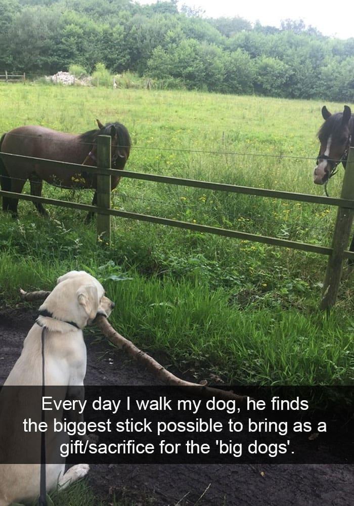 dog-sacrifice-stick