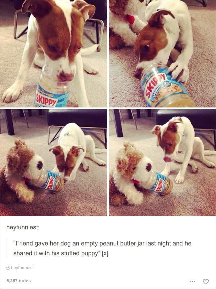dog-shares-peanut-butter-with-teddy