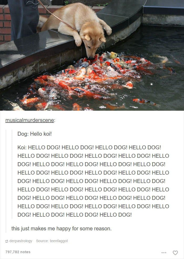 dog-surrounded-by-koi