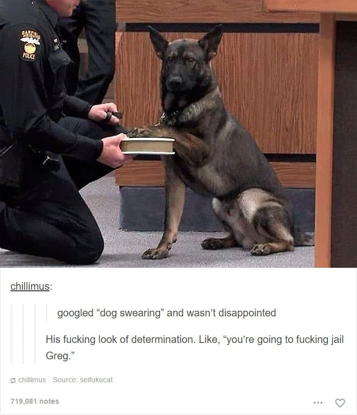 dog-swearing-oath