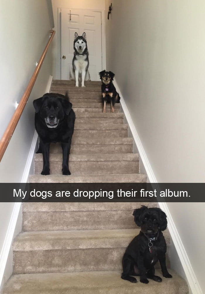 dogs-dropping-their-first-album