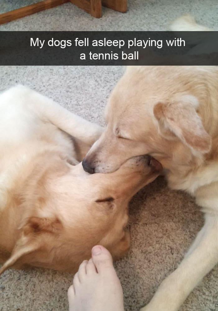 dogs-fell-asleep-tennis-ball