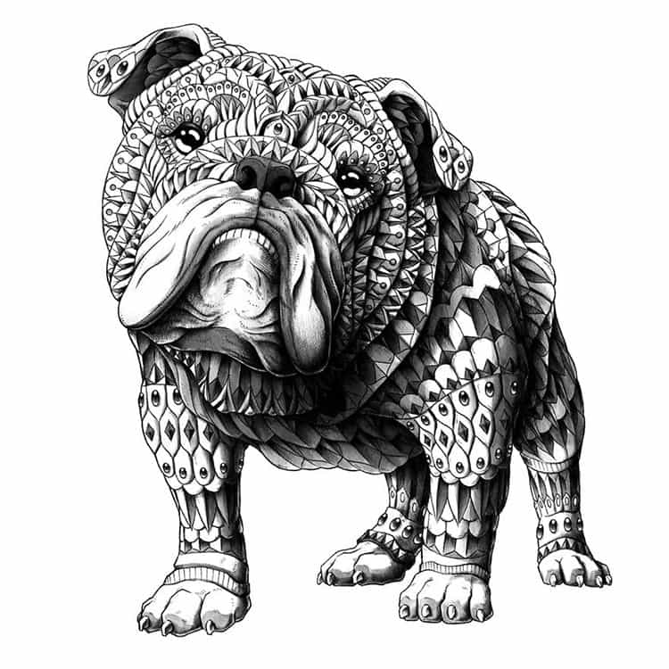 english-bulldog-paisley-drawing