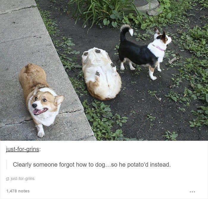 forgot-how-to-dog-potato