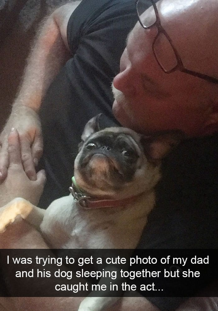 funny-face-pug-caught-in-act