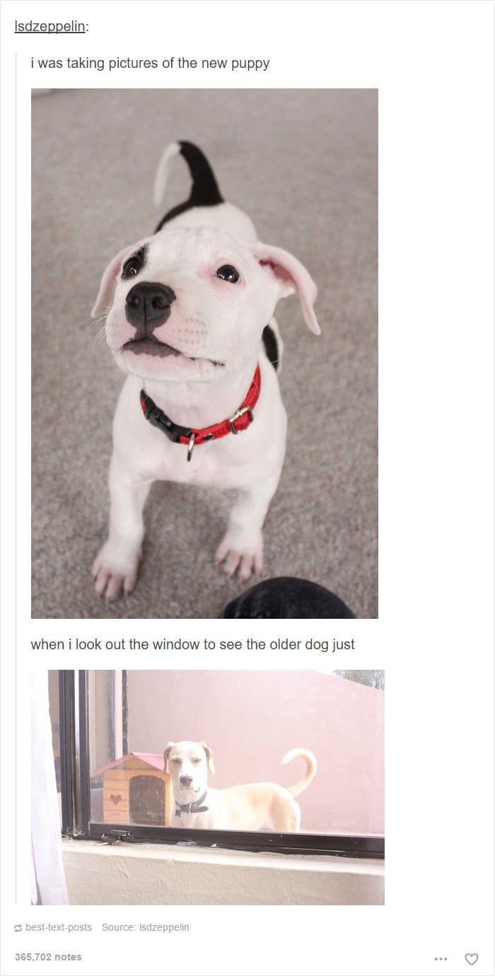 jealous-older-dog