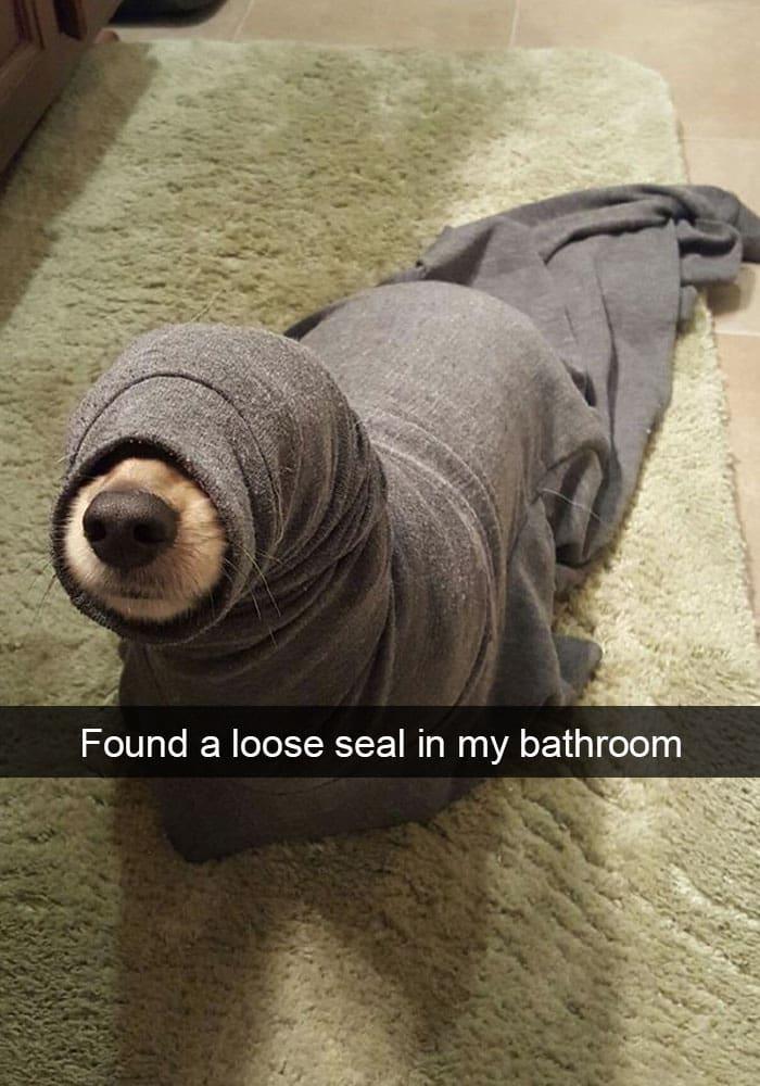 loose-seal-dog
