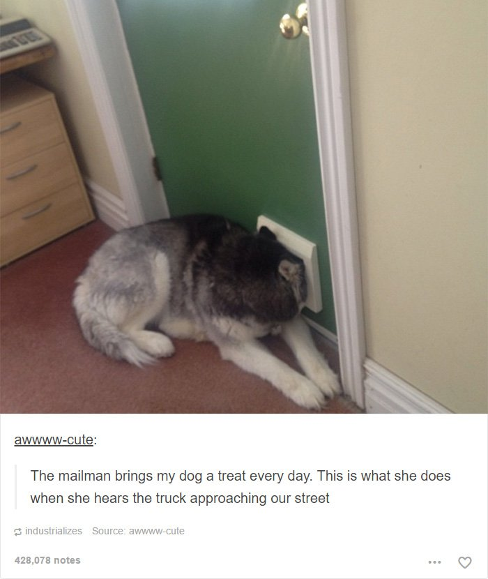 mailman-brings-dog-treat