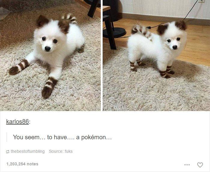 pokemon-dog