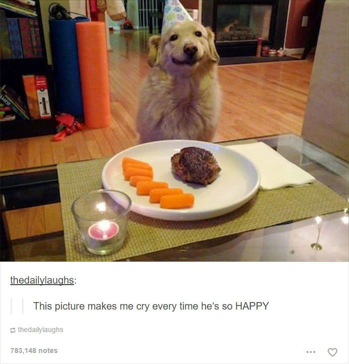 smiling-dog-with-meal