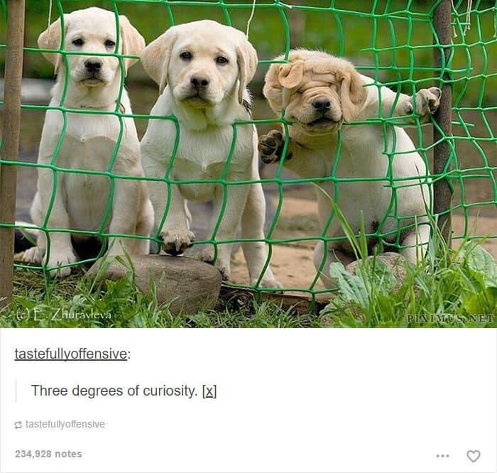 three-degrees-of-dog-curiosity