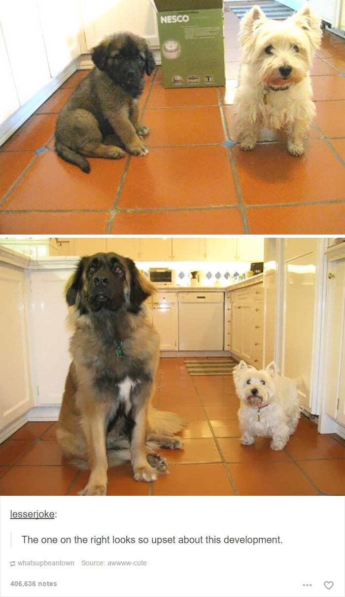 time-lapse-dogs-growing