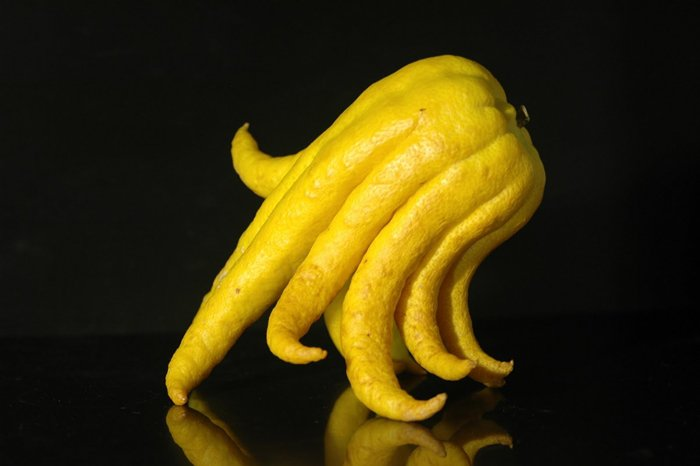 10 Weird And Wonderful Exotic Fruits You Need To Try