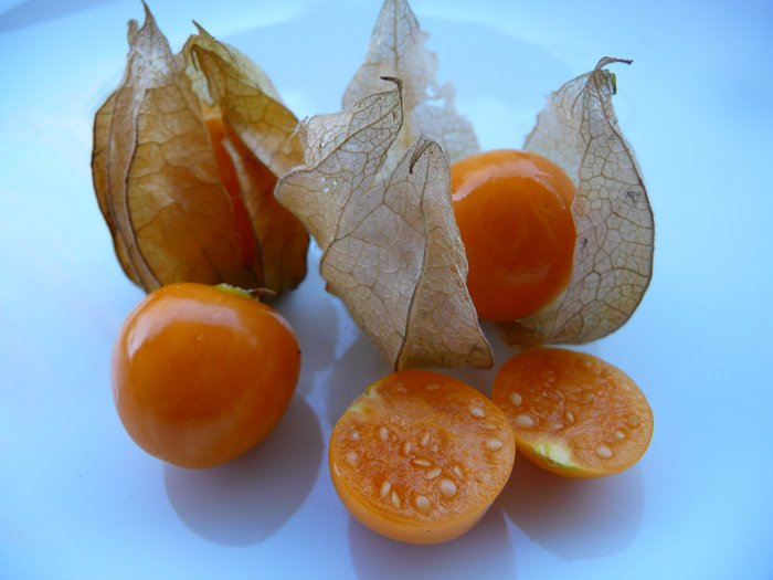 weird-fruits-tomato-family-physalis-sweet-but-acidic