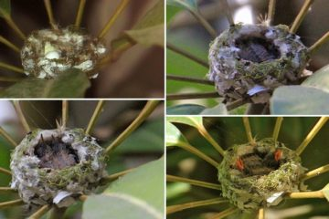 photo-sequence-hummingbirds-being-born
