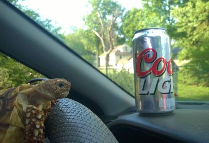 tortoise-drinking-driving