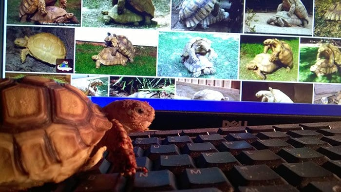 tortoise-on-the-internet