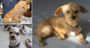 two-legged-dog-amaze-bobb