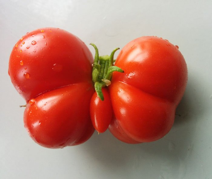 oddly-shaped-fruit-vegetables-butterfly-tomato