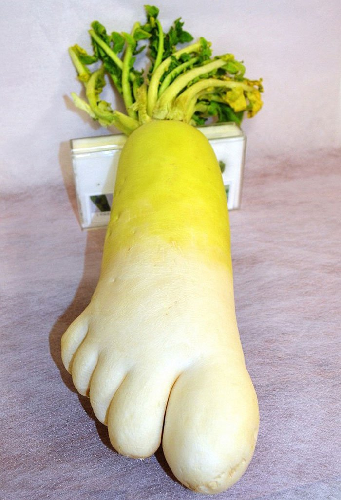 oddly-shaped-fruit-vegetables-foot-shaped-radish