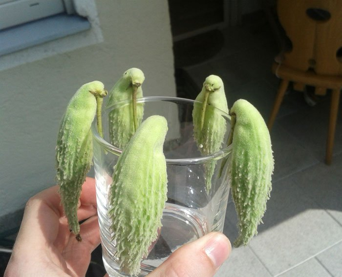 oddly-shaped-fruit-vegetables-fruit-birds
