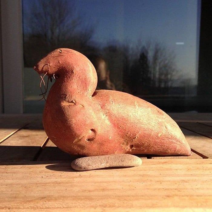 oddly-shaped-fruit-vegetables-sea-lion-potato