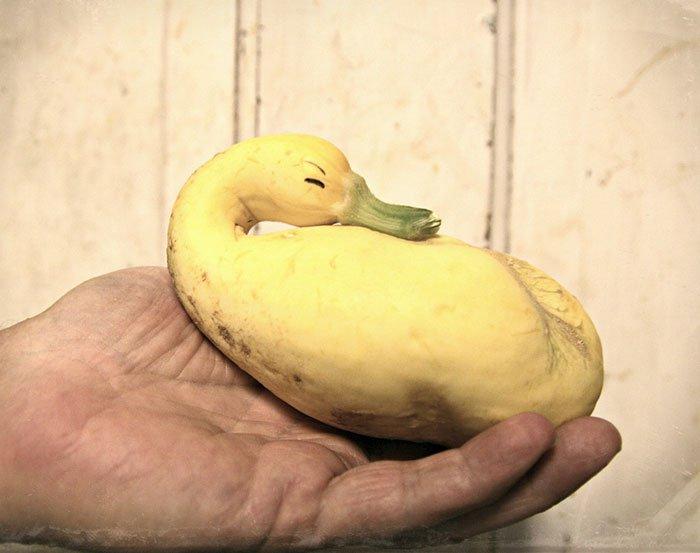 oddly-shaped-fruit-vegetables-squash-duck