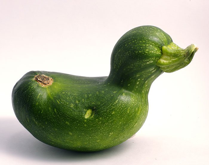 oddly-shaped-fruit-vegetables-zucchini-duck