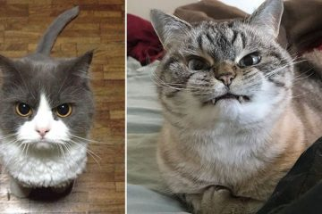 Adorable Angry Cats