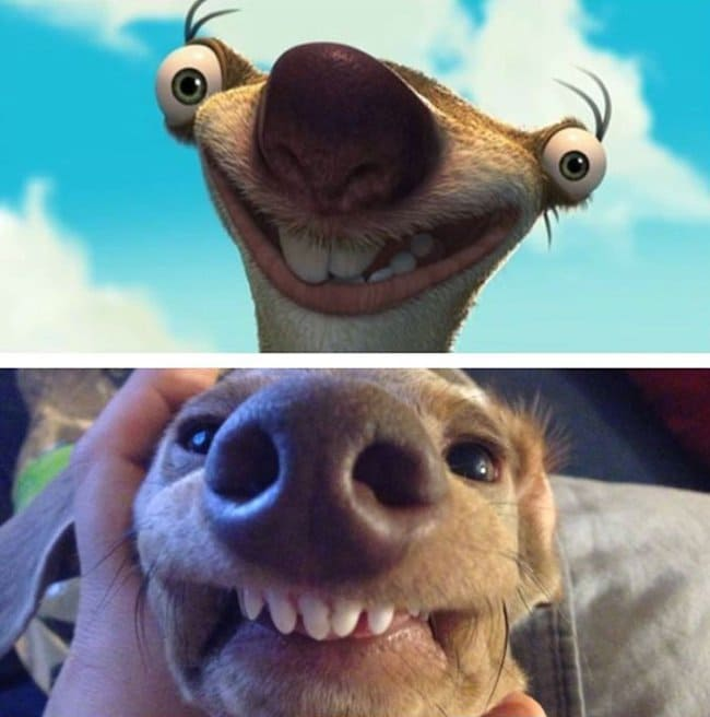 Real Life Cartoon Characters dog sid ice age