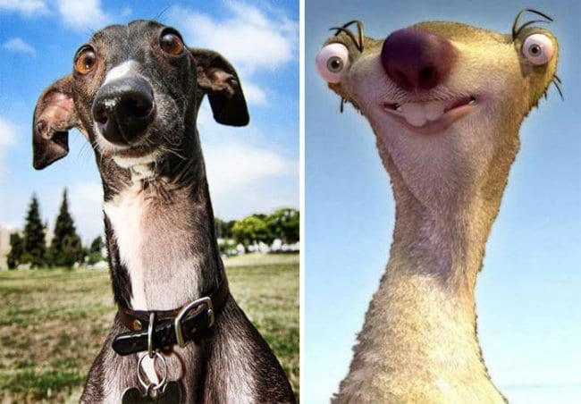 Real Life Cartoon Characters greyhound sid ice age