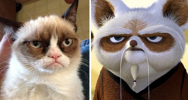 Real Life Cartoon Characters grumpy cat and master shifu kung fu panda