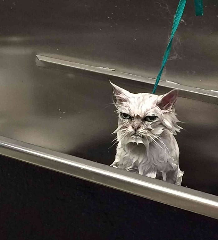 angry cats soaked and unamused