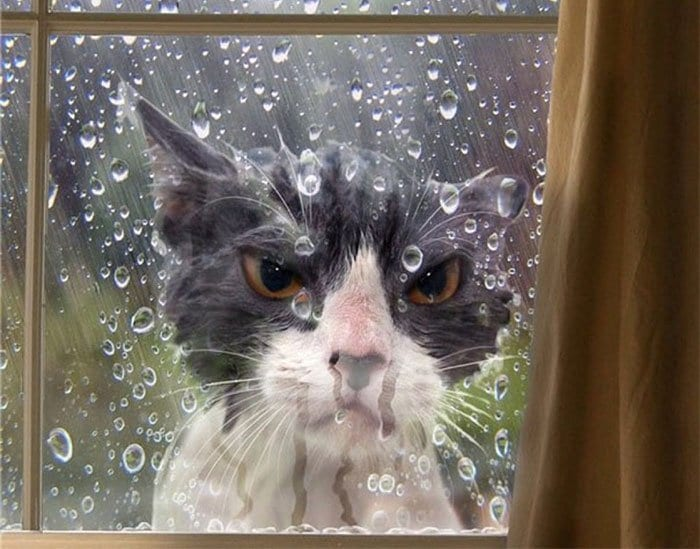 angry cats wet cat