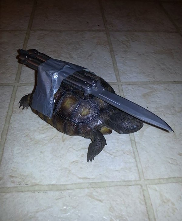 funny-couples guard turtle
